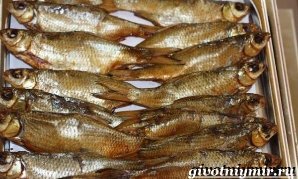 vobla-ryba-obraz-zhizni-i-sreda-obitaniya-ryby-vobly-8.jpg