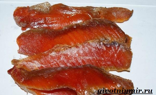 vobla-ryba-obraz-zhizni-i-sreda-obitaniya-ryby-vobly-6.jpg