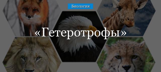geterotrofy.jpg