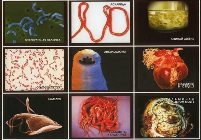 biologiya-43385-biotrofy.jpg