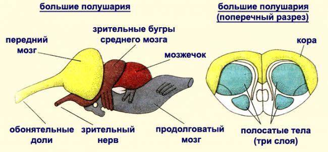 mozg-presmikayushohsya.jpg