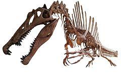 240px-Spinosaurus_white_background_2.jpg