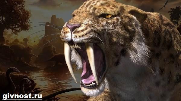 sablezubyj-tigr-opisanie-osobennosti-i-sreda-obitaniya-sablezubyx-tigrov-6.jpg