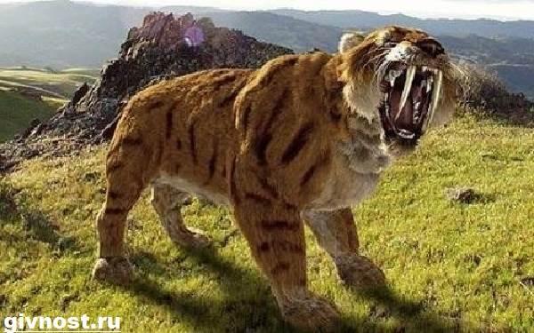 sablezubyj-tigr-opisanie-osobennosti-i-sreda-obitaniya-sablezubyx-tigrov-5.jpg