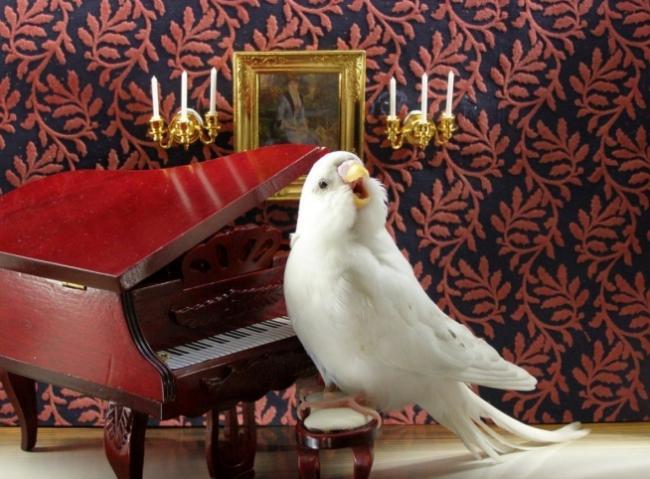 muzyka-volnistogo-popugaya-2.jpg
