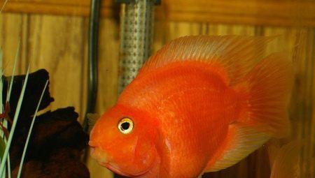 ryby-popugai-raznovidnosti-i-sekrety-soderzhaniya-39.jpg
