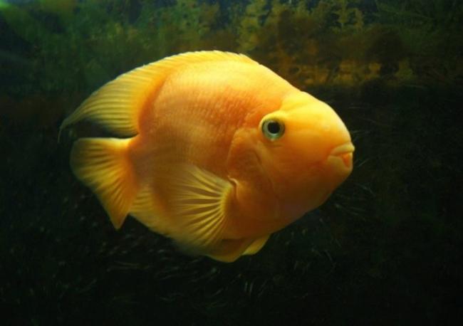 ryby-popugai-raznovidnosti-i-sekrety-soderzhaniya-7.jpg