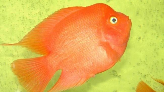 ryby-popugai-raznovidnosti-i-sekrety-soderzhaniya-17.jpg