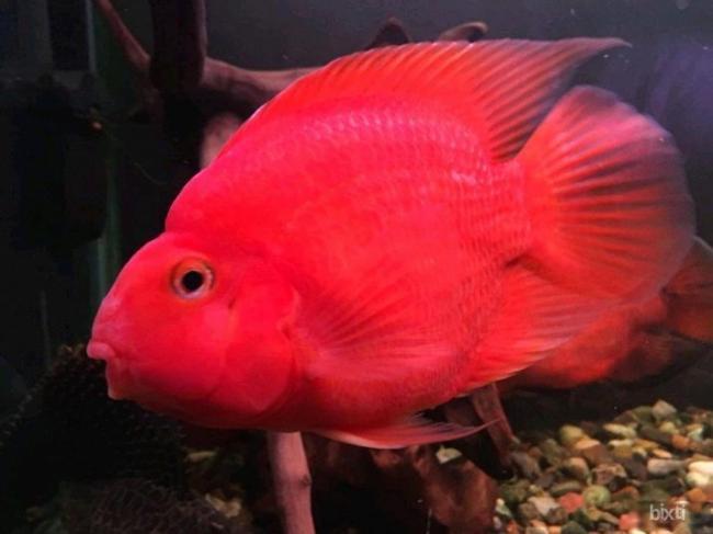 ryby-popugai-raznovidnosti-i-sekrety-soderzhaniya-20.jpg