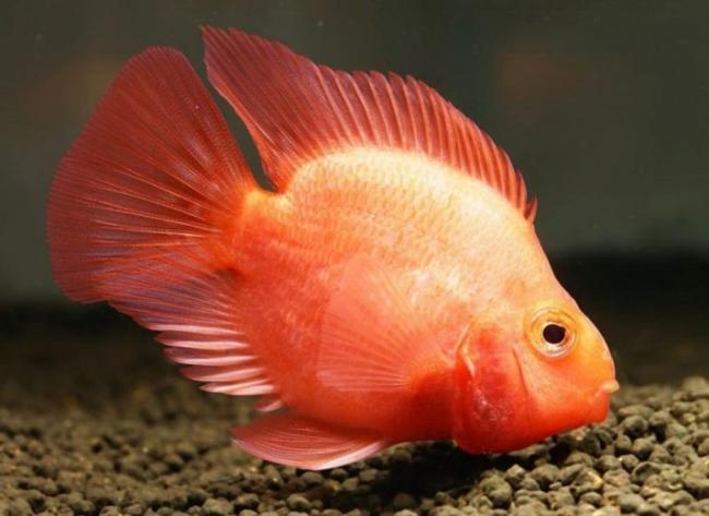 ryby-popugai-raznovidnosti-i-sekrety-soderzhaniya-40.jpg