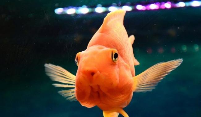ryby-popugai-raznovidnosti-i-sekrety-soderzhaniya-41.jpg