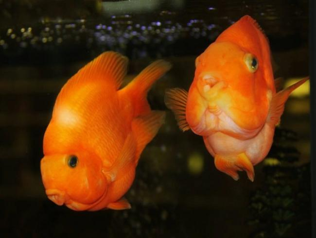 ryby-popugai-raznovidnosti-i-sekrety-soderzhaniya-33.jpg