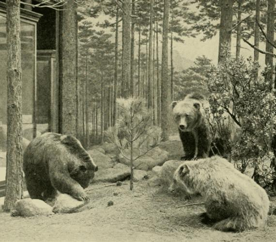 Mexico_grizzlies_620.png