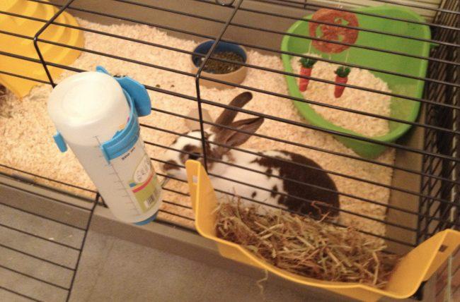 Уход-и-содержание-декоративных-кроликов-поилка-650x428.jpg