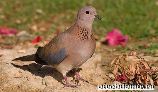 gorlica-ptica-obraz-zhizni-i-sreda-obitaniya-gorlicy-1.jpg