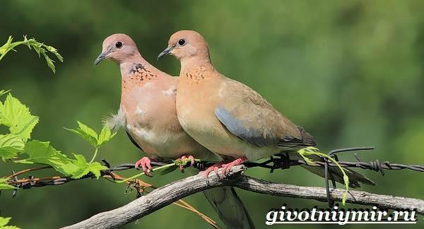 gorlica-ptica-obraz-zhizni-i-sreda-obitaniya-gorlicy-2.jpg
