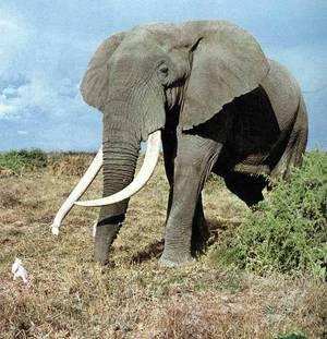 afrikanskiislon.jpg