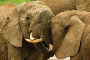 sreda-obitaniya-slonov.jpg