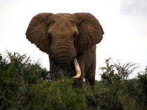 zhizn-slonov.jpg