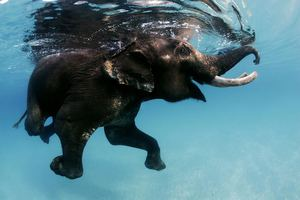 slonenok.jpg