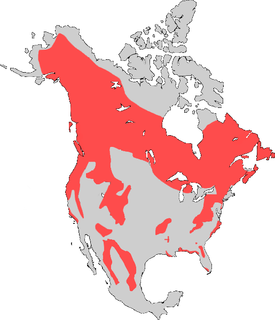 275px-American_Black_bear_map_with_borders_removed.png