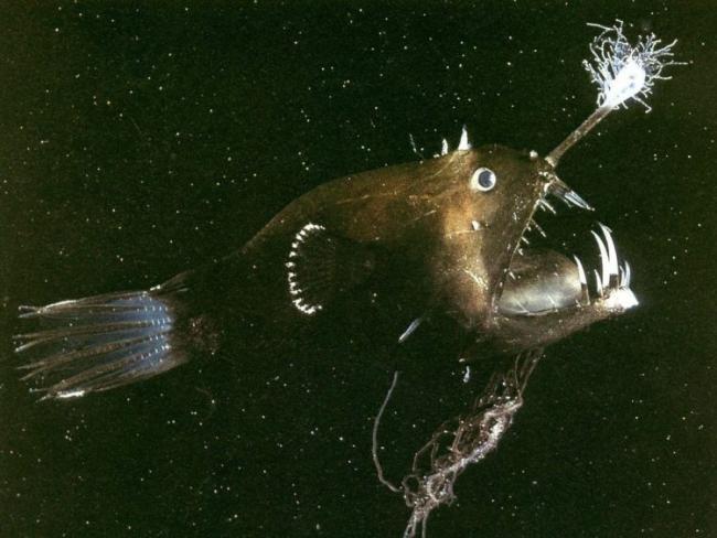 Anglerfish-2-e1540586176506.jpg