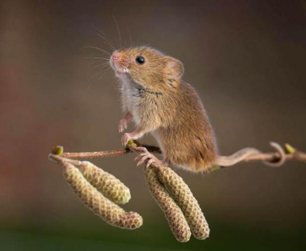 wild-mouse-photography-1.jpg