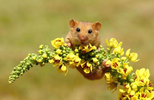 wild-mouse-photography-3.jpg