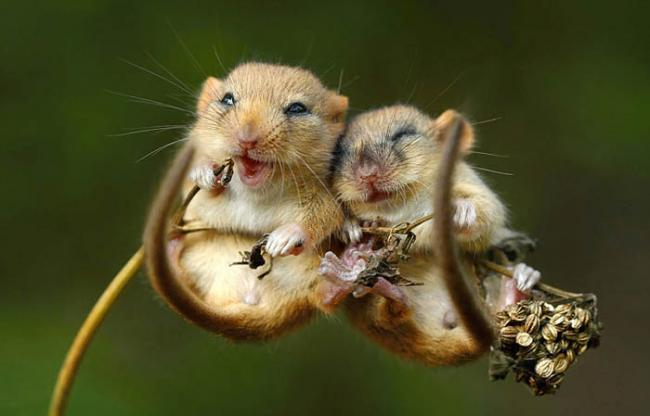 wild-mouse-photography-6.jpg