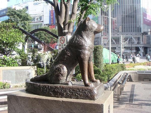 akita-story.jpg