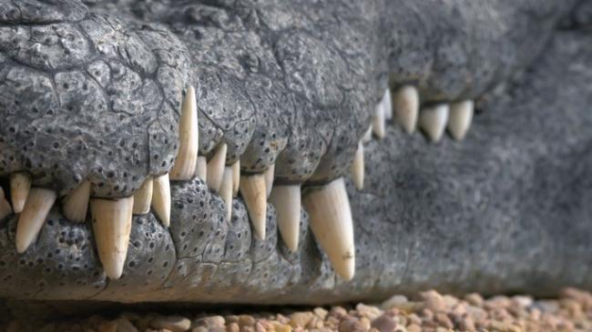 krokodil-cke.jpg