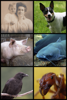 220px-Omnivore_Examples.png