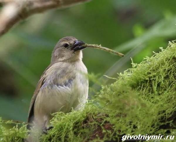 yurok-ptica-obraz-zhizni-i-sreda-obitaniya-pticy-yurok-7.jpg