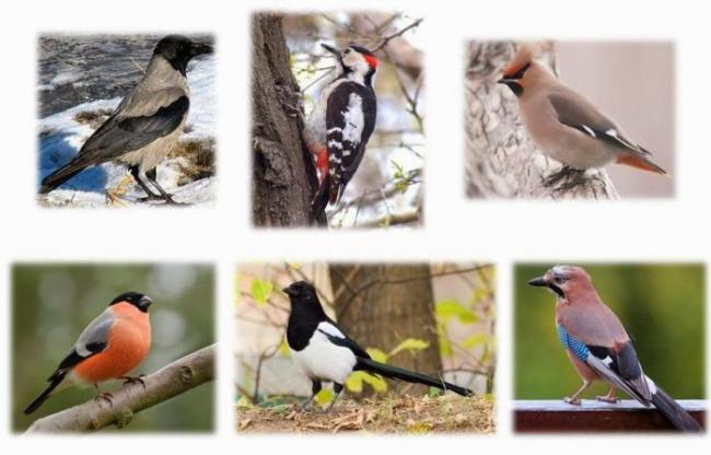 pticy-zimoj-700x448.jpg