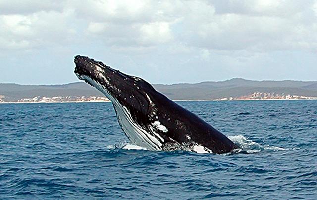 10-синий-кит.jpg