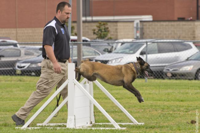 agility_for_dogs_1.jpg