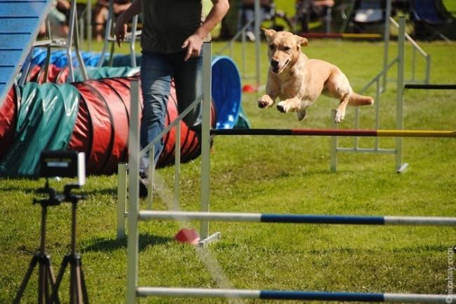 agility_for_dogs_2.jpg