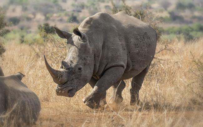 1249954-rhino.jpg