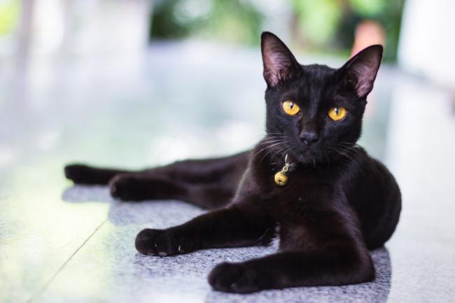 black-cat-99-1.jpg