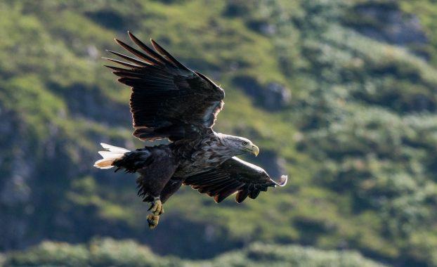 Хищные-птицы-России-фото-Орлана-белохвоста-622x380.jpg