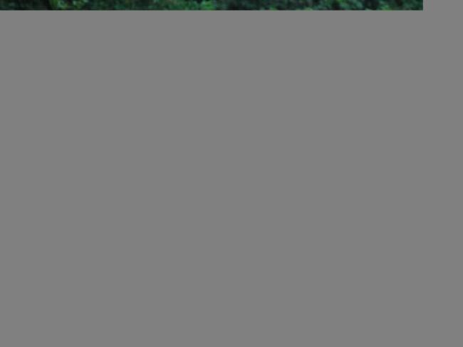 obzor-loshadi-podvida-poni-13.jpg