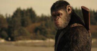 10 самых знаменитых обезьян в истории кино