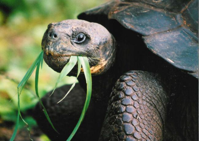 die Schildkröte auf dem Mittagessen1.jpg