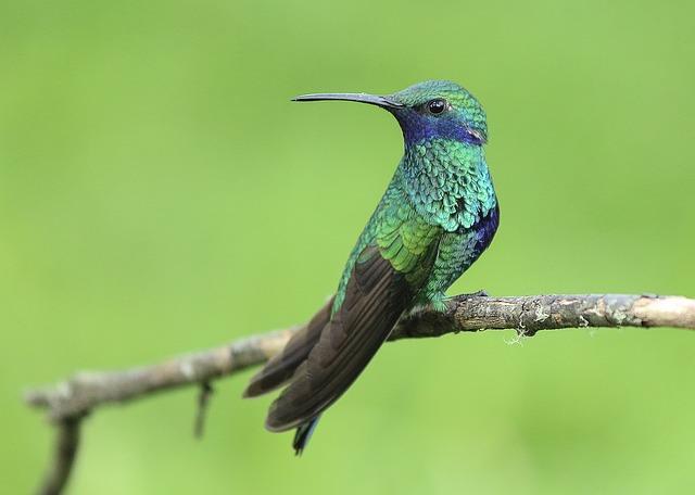 hummingbird-1068370_640.jpg