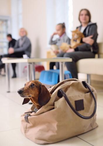 1518338896_veterinarian.jpg