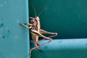 Grasshoppers_Insects_Closeup_597870_600x400.jpg