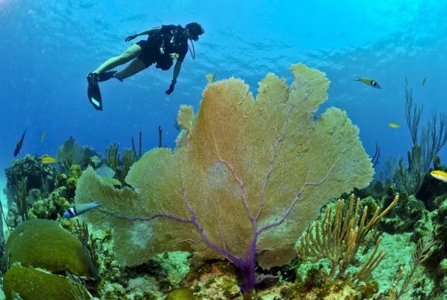 Rasteniya-Mirovogo-okeana-2.jpg