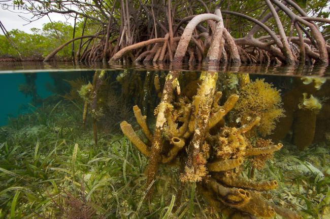 Mangrovye-lesa.jpg