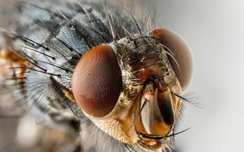 глаза-мухи-1.jpg