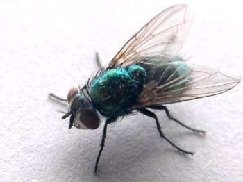 зелёная-муха.jpeg